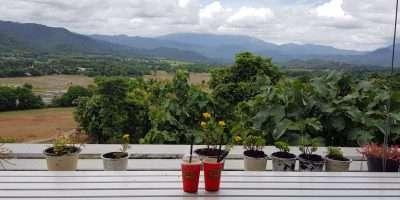Uitzicht Vanaf Het Terras Bij Coffee In Love In Pai, Thailand