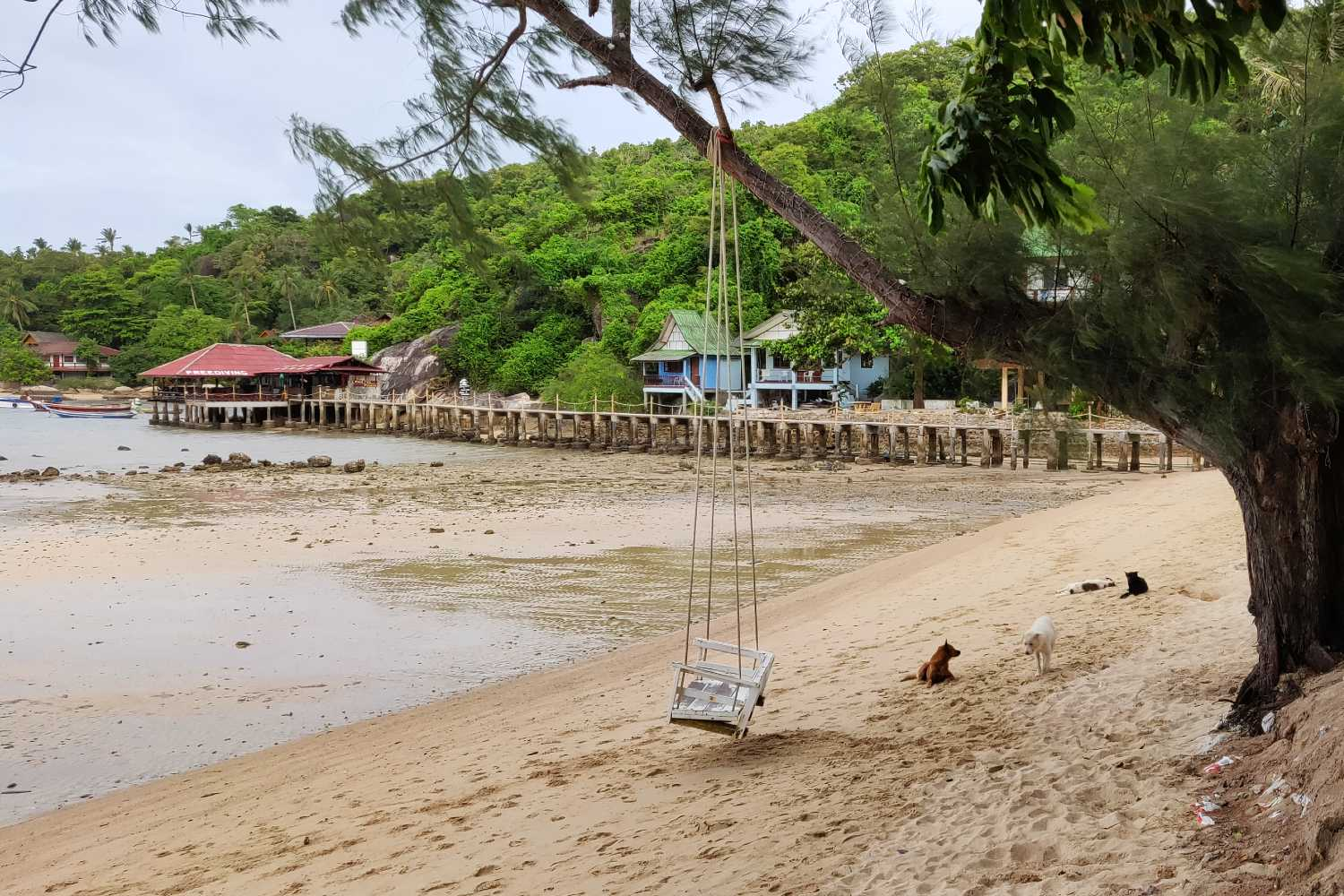 Swing on the beach of Chalok Baan Kao Bay in Koh Tao at low tide