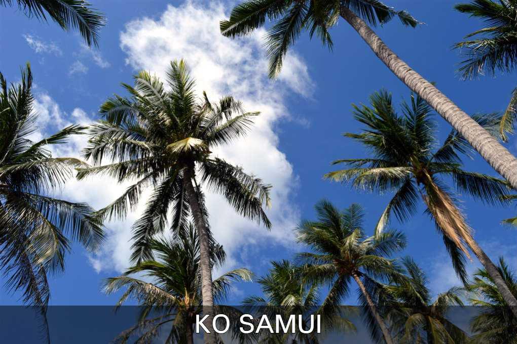Palmbomen Op Ko Samui