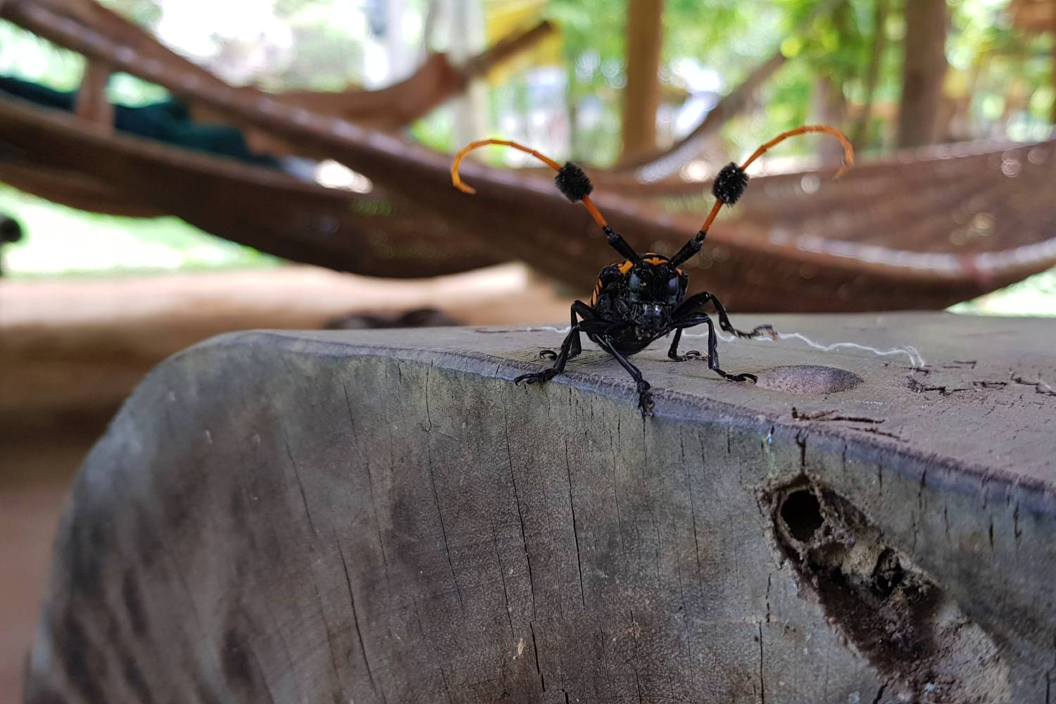Strange bug while we visited the Pai Land Split in Thailand