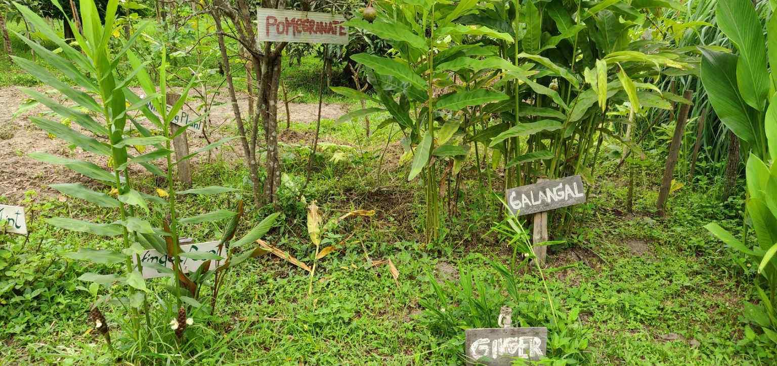 Kruiden, groenten en fruit op het terrein van de Pai Land Split