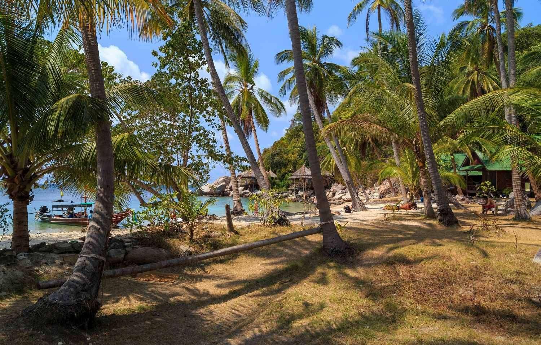Schaduw onder de palmbomen op het strand van Sai Nuan in Koh Tao