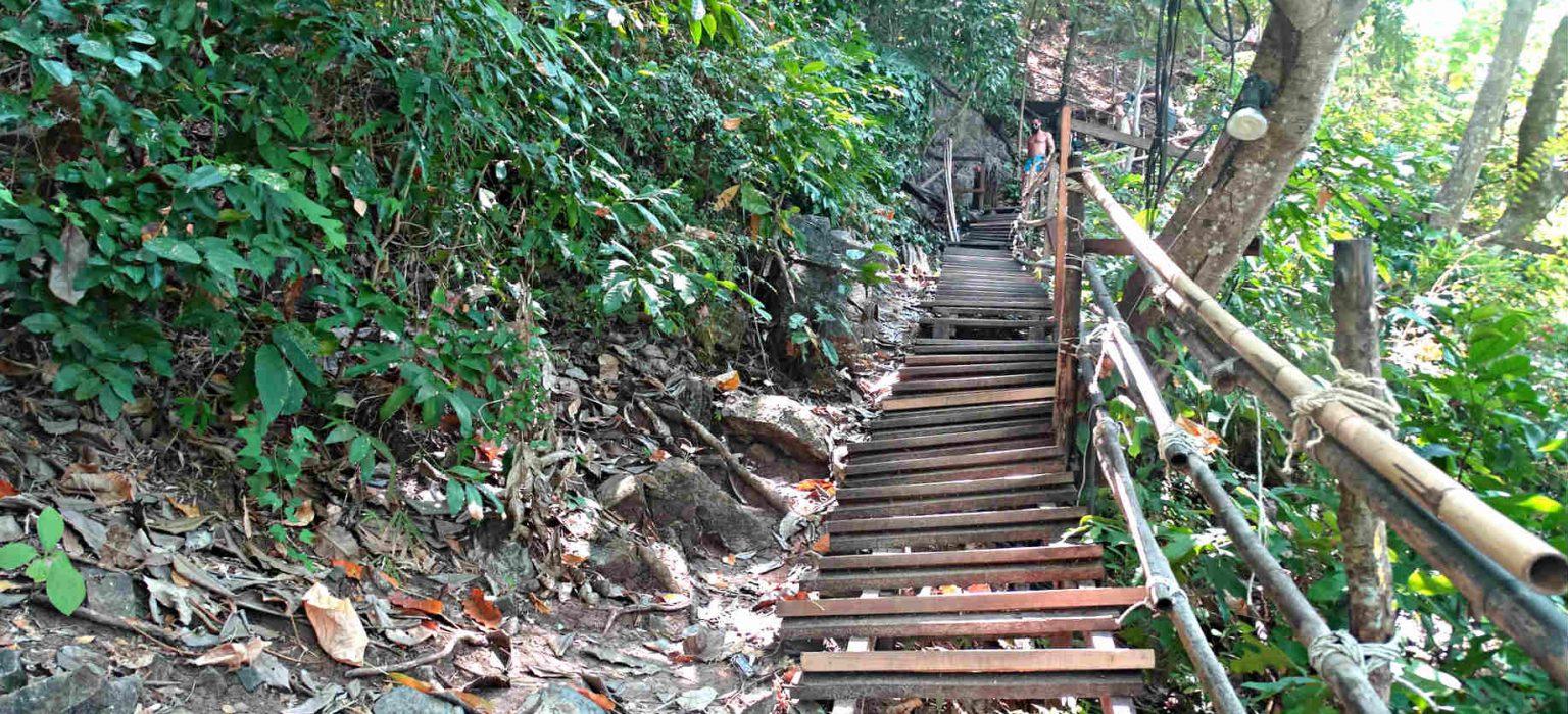 Steile houten trap tussen het groen van de Monkey Trail.