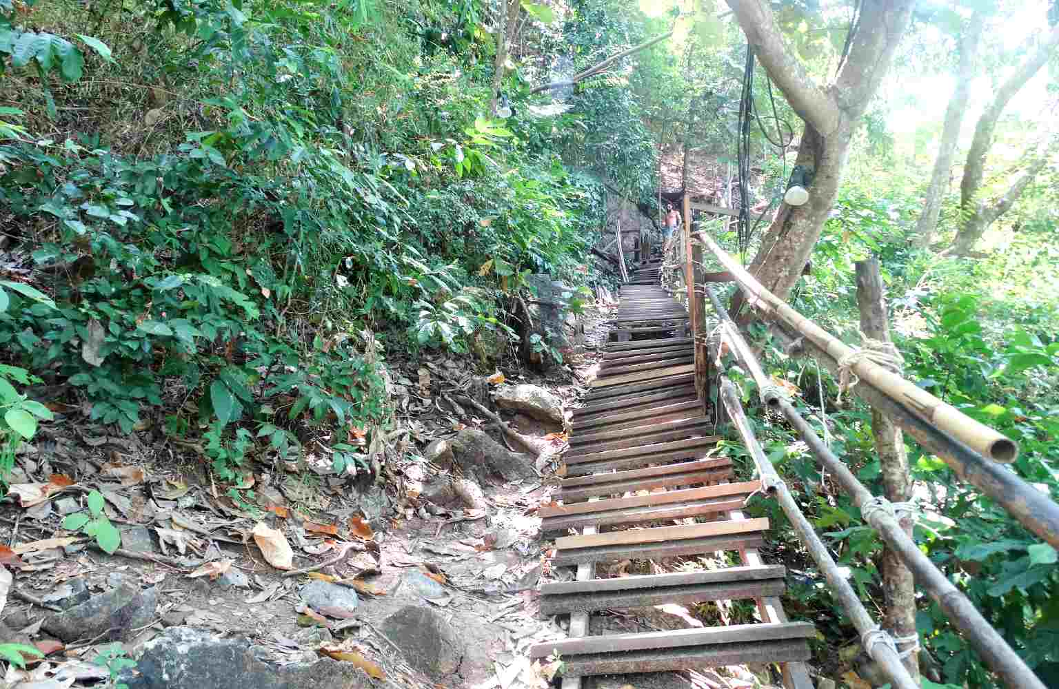 Steep wooden stairs between the green of the Monkey Trail from Ao Nang Beach to Pai Plong Beach.