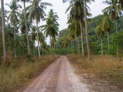A Road On The Island Of Koh Tarutao