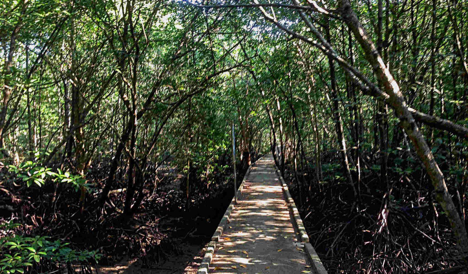 Mangrove wandelpad in Krabi Town,