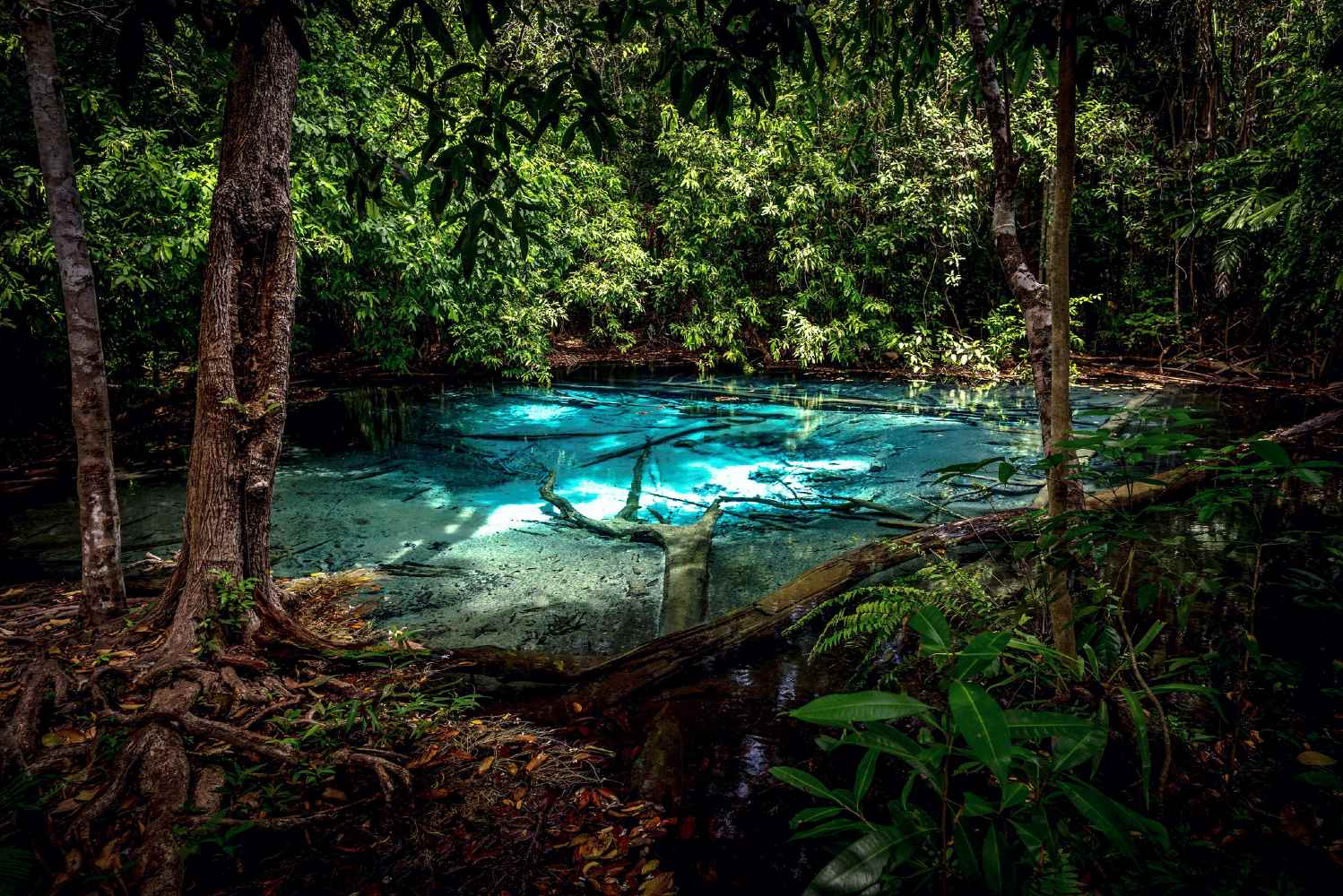 Clear blue waters of the Blue Pool surrounded by jungle