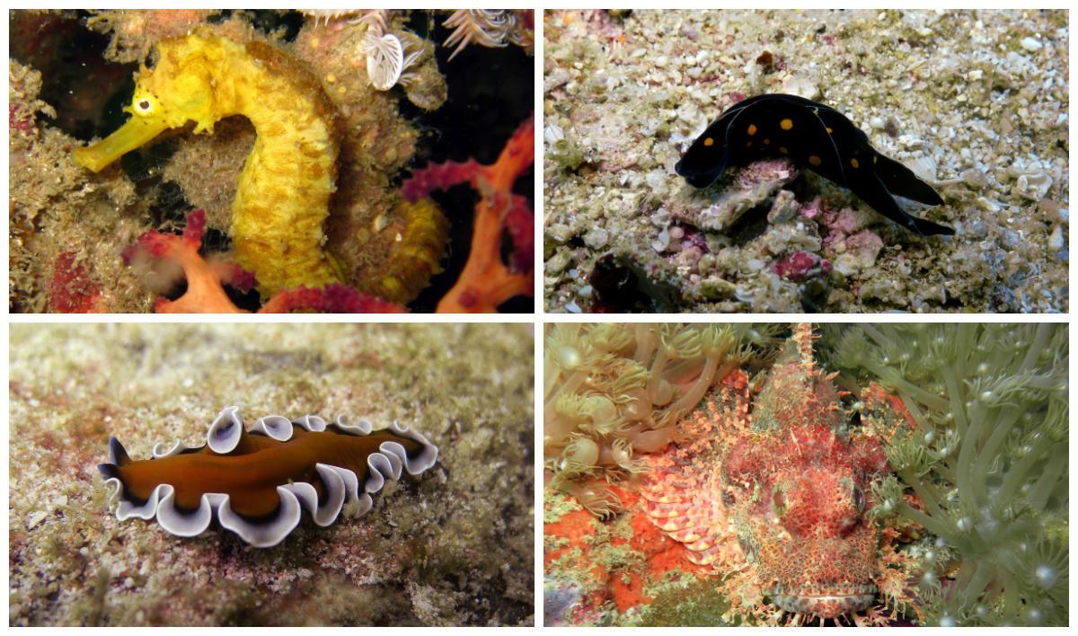 collage marinelife at Tarutao National Park