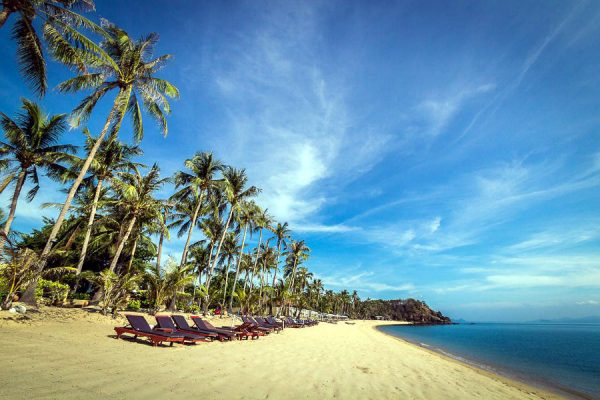 palm trees and sunbeds on the golden yellow beach of Coco Palm Beach, Maenam Beach.