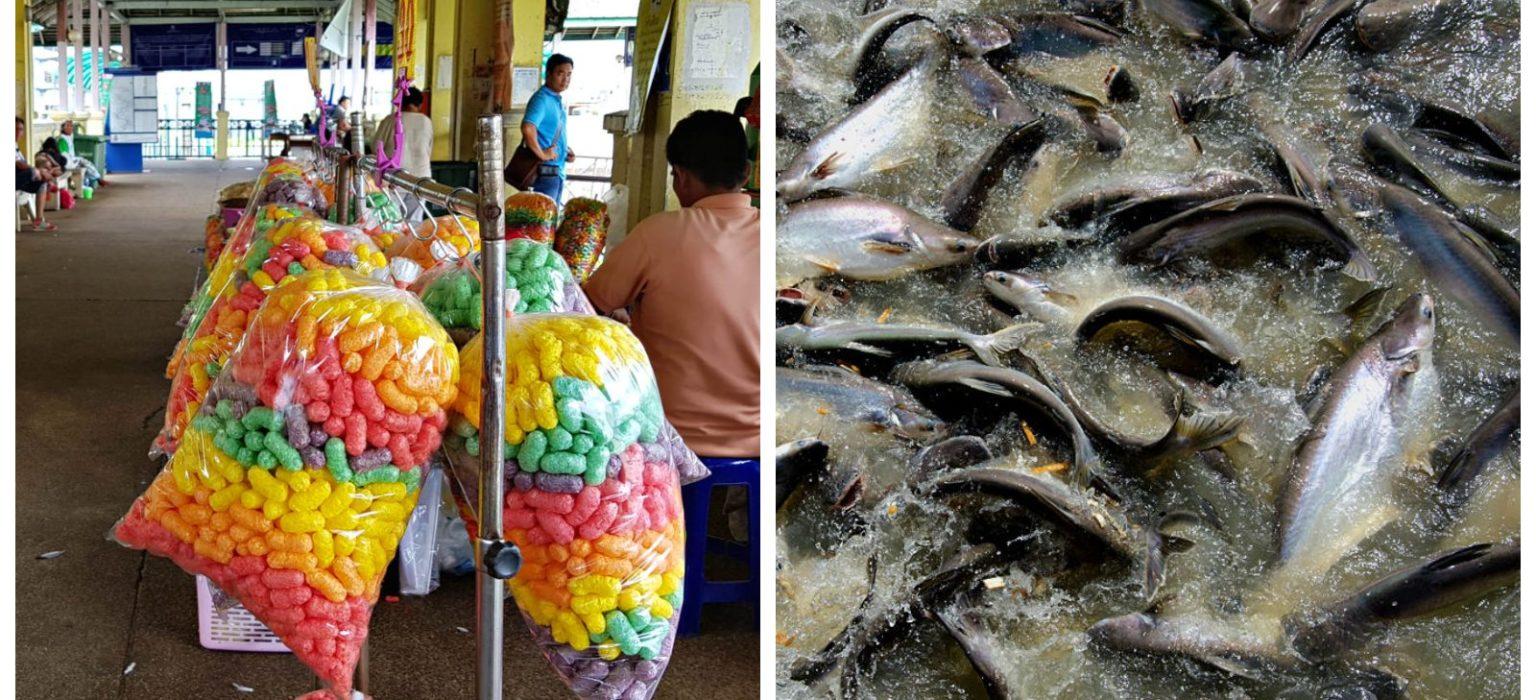 Collage van 2 foto's, visvoer en vissen in de rivier van Bangkok