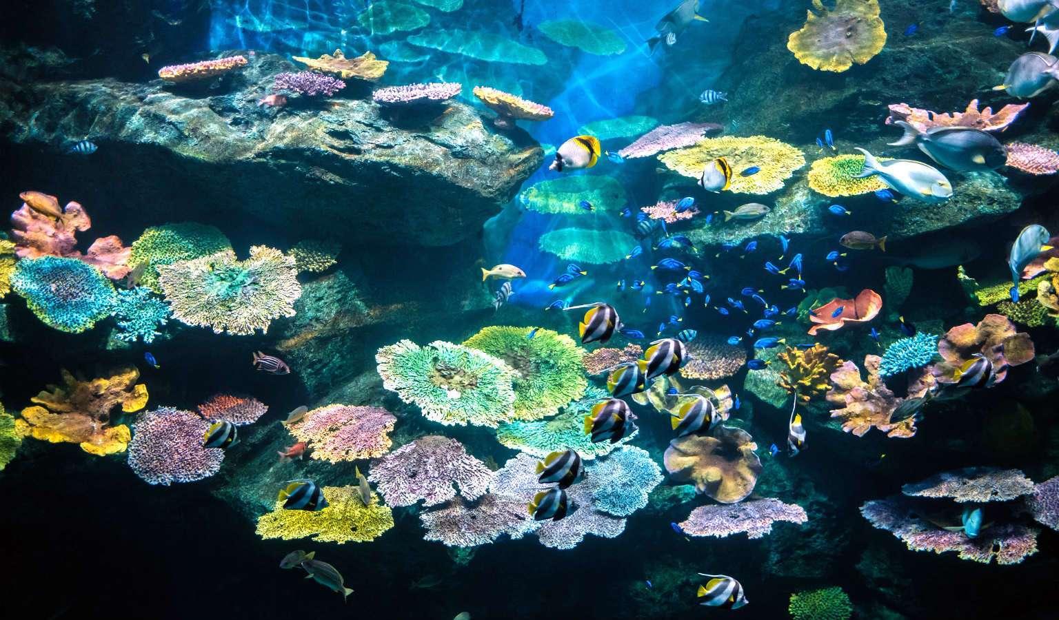 Sea Life Bangkok, large Aquarium in Bangkok