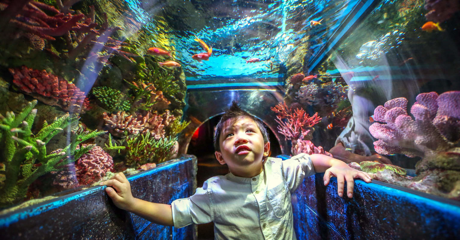 Siam Square, See life, kinderen in aquarium