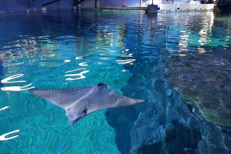 Stingray in Sea Life Bangkok, Thailand