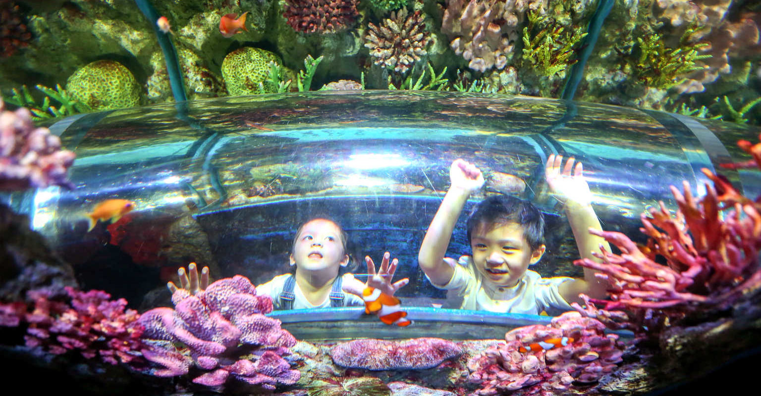 Sea Life, kinderen in aquarium, recreatie met familie in Bangkok