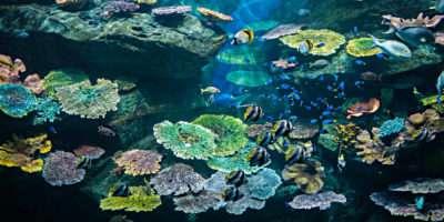 Ea Life Bangkok, Groot Aquarium In Bangkok