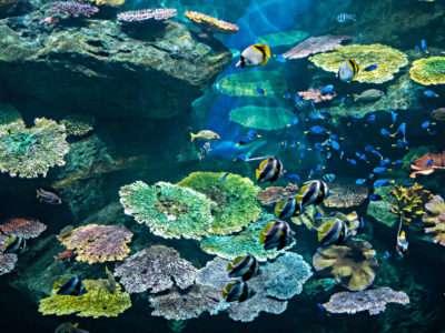 Sea Life Bangkok, Groot Aquarium In Bangkok