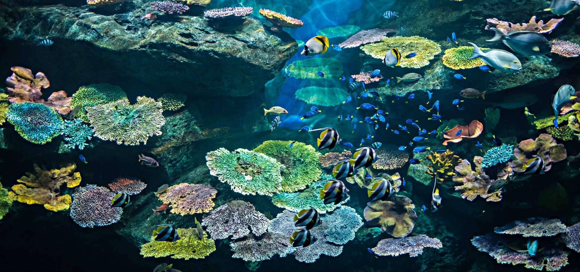 Sea Life Bangkok, huge aquarium in Bangkok