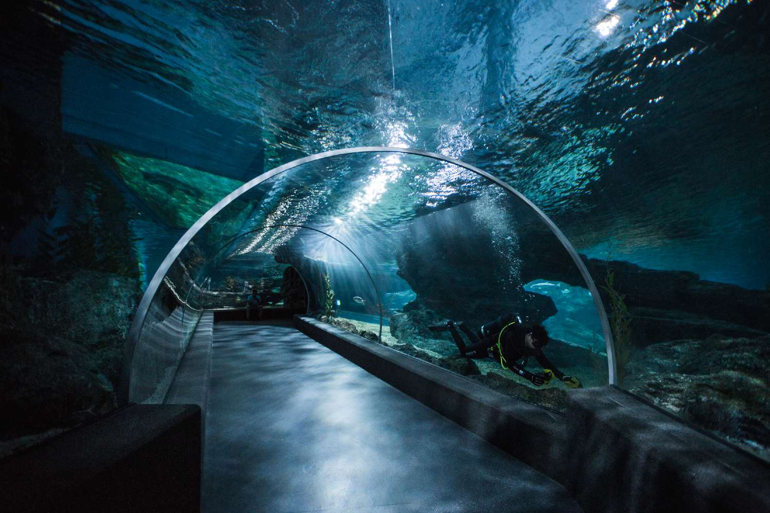 Underwater tunnel through which you can walk in Sea Life Bangkok, Thailand