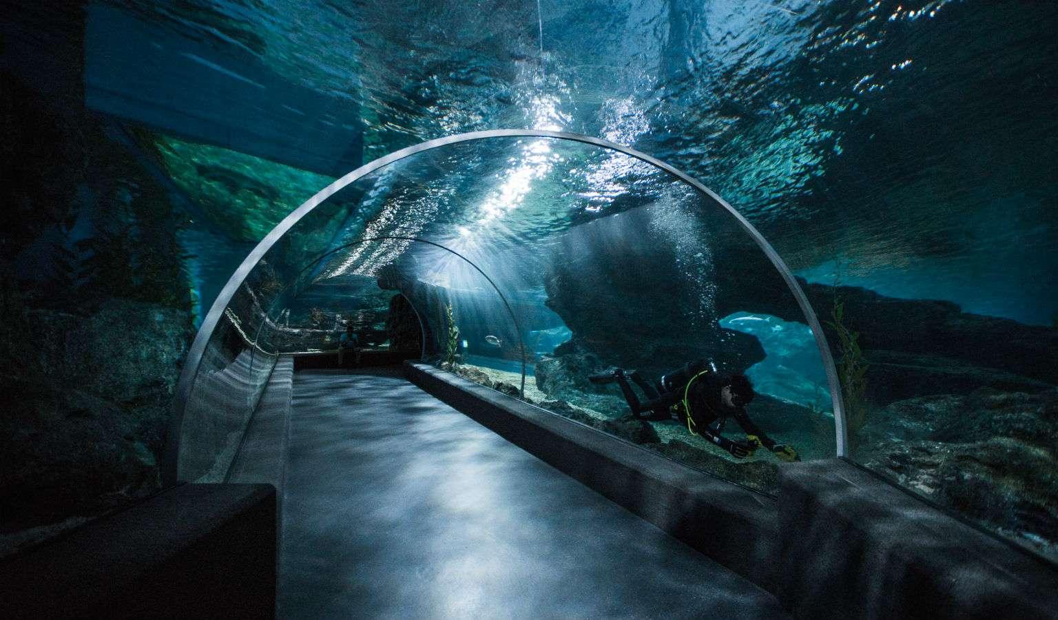 Tunnel SEA LIFE Bangkok
