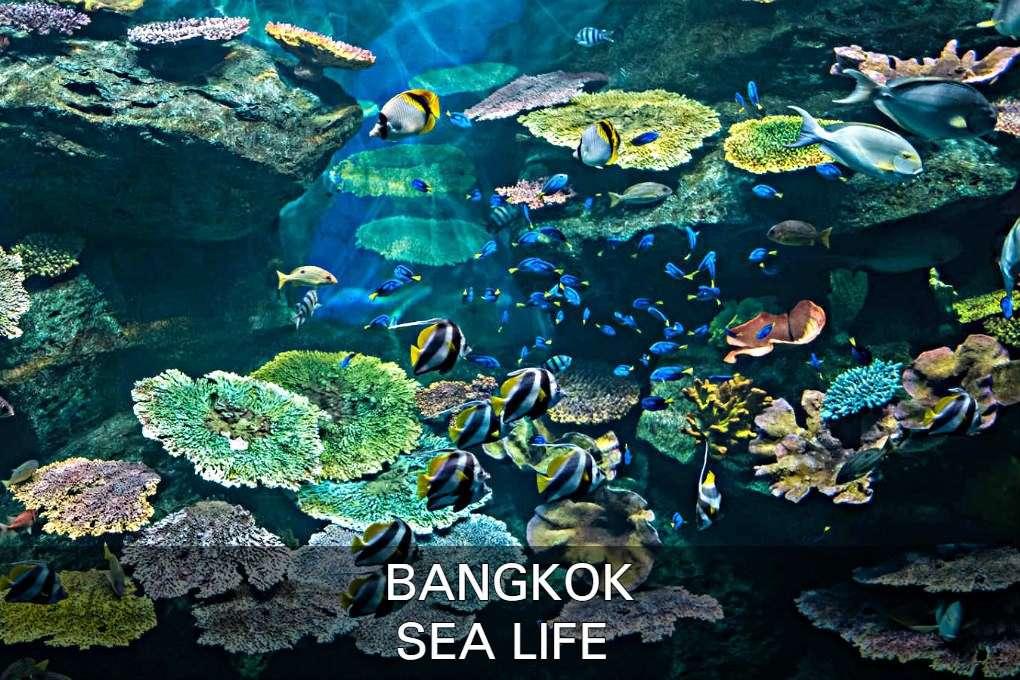 Link Naar Sea Life Met Een Foto Van Het Aquarium