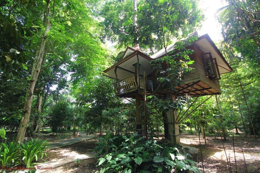 Een boomhut van het Baan Khao Sok Resort