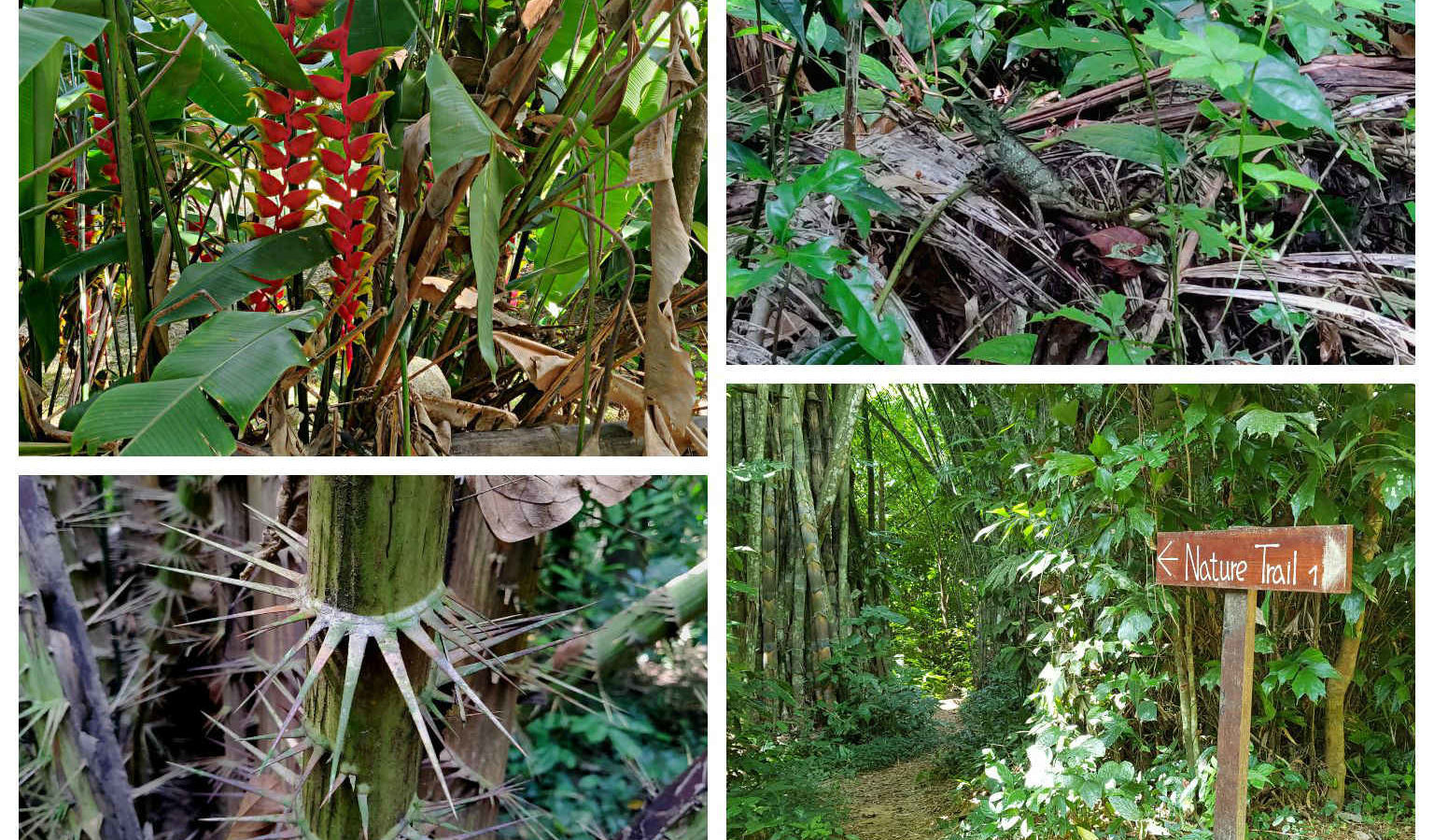 Collage van jungle nature trail Our Jungle House