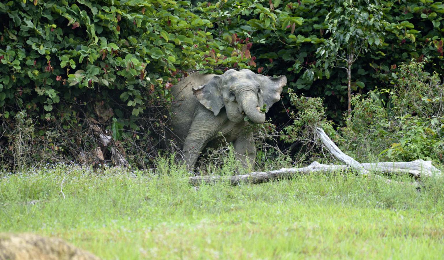 Cheow Lan Lake, olifant aan de oever van het meer , Khao Sok