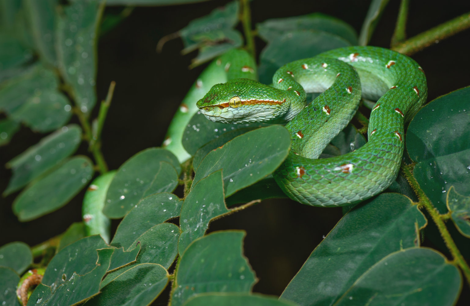 Snake in tree during night safari in Khao Sok National Park