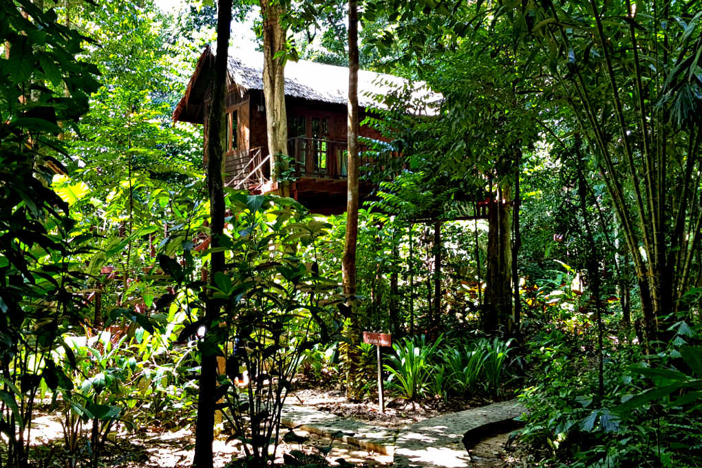 Slapen in de Jungle, boomhut Our Jungle House