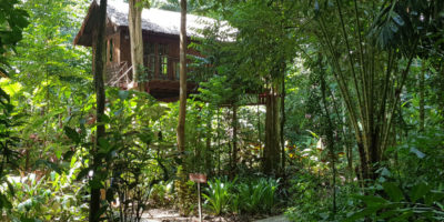 Een Boomhut Van Our Jungle House In Khao Sok, Thailand