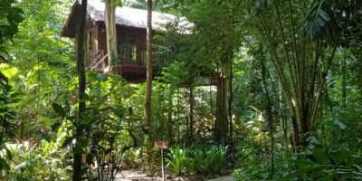 Boomhut Van Our Jungle House In Khao Sok, Thailand