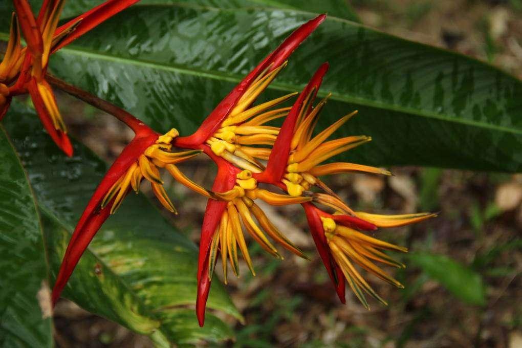 Een prachtige bloem in de tropische tuin van het Khao Sok Morning Mist Resort
