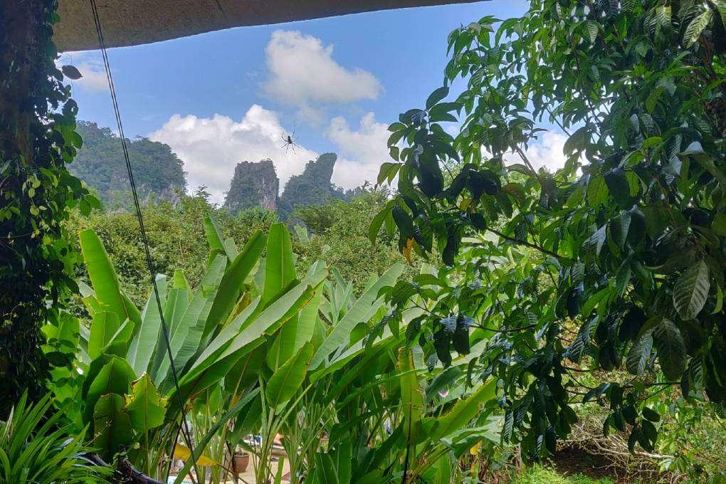 Uitzicht op de kliffen van Khao Sok
