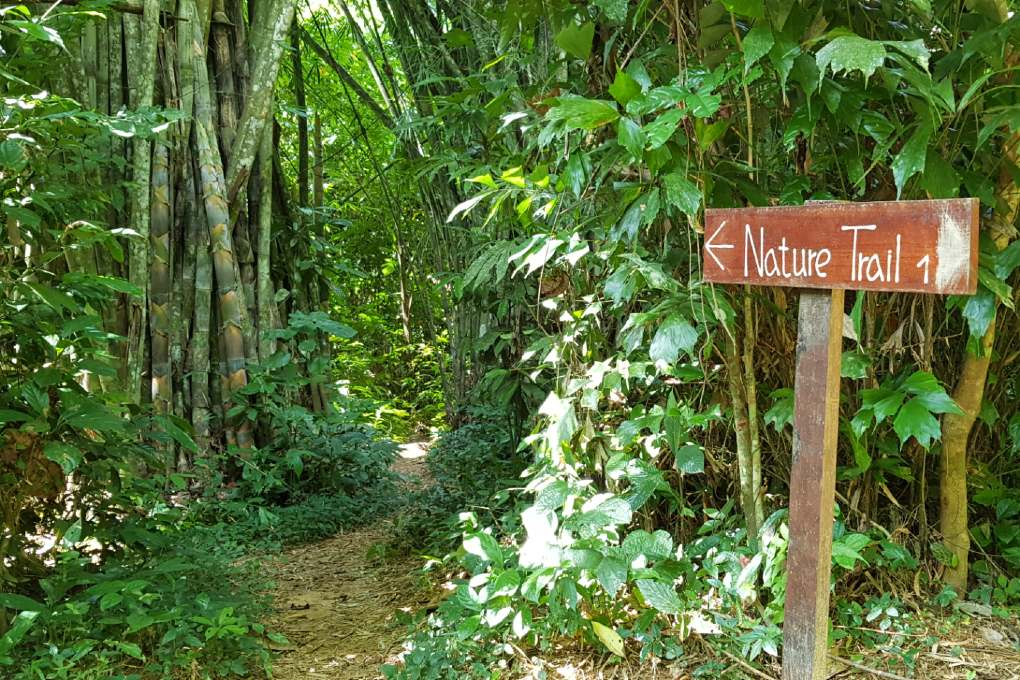 De Our Jungle House Nature Trail in Khao Sok