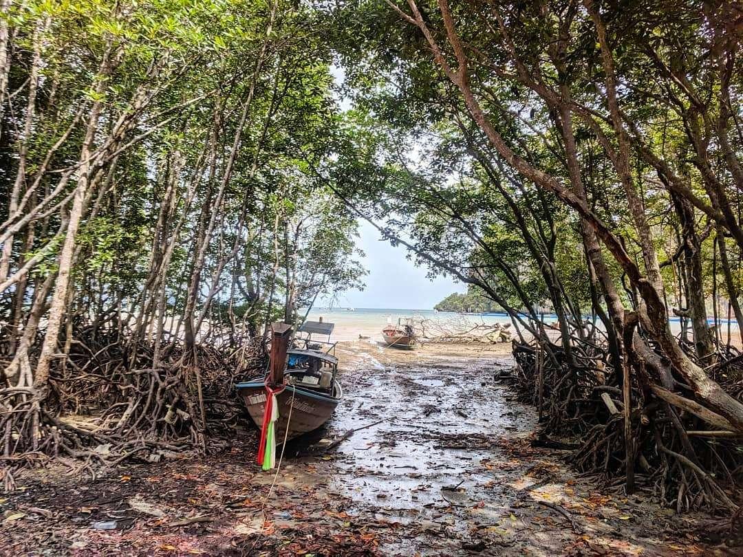 Mangrove tijdens eb met longtailboot op het droge gelegen aan Railay East