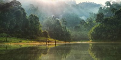 De Zon Boven Cheow Lan Lake En De Prachige Groene Kleuren Van De Jungle