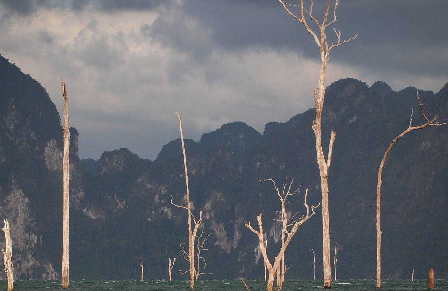 Dode bomen die uit het Cheow Lan Lake steken met een donkere lucht alsof het ieder moment gaat stormen