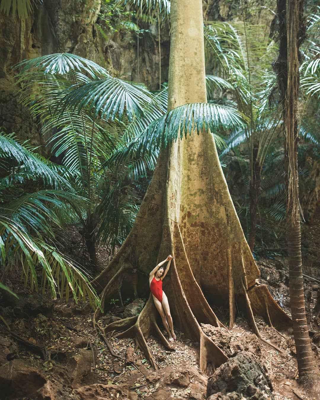 Oude tropische boom in de Princess Lagoon