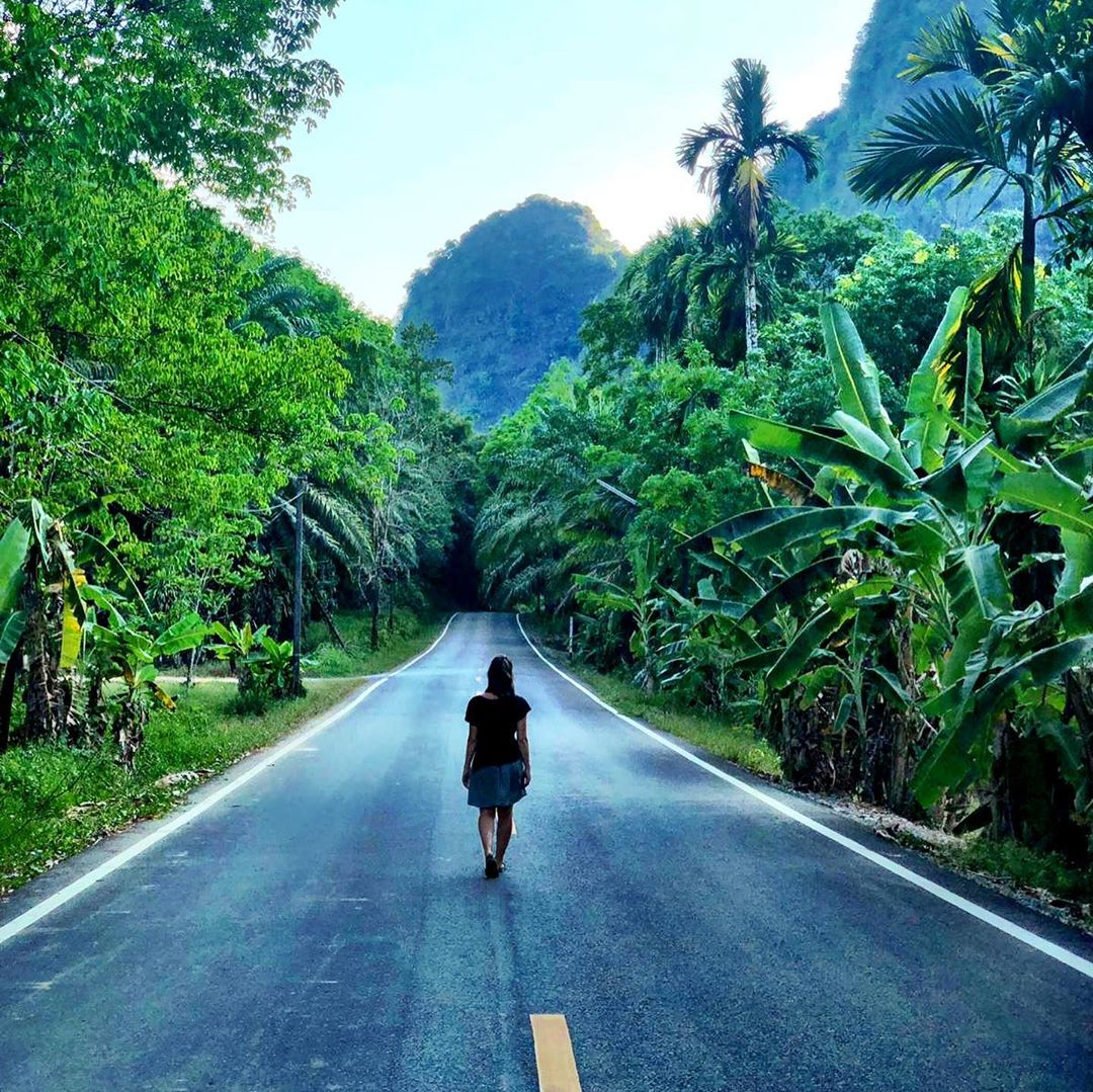 A paved road through the jungle of Khao Sok