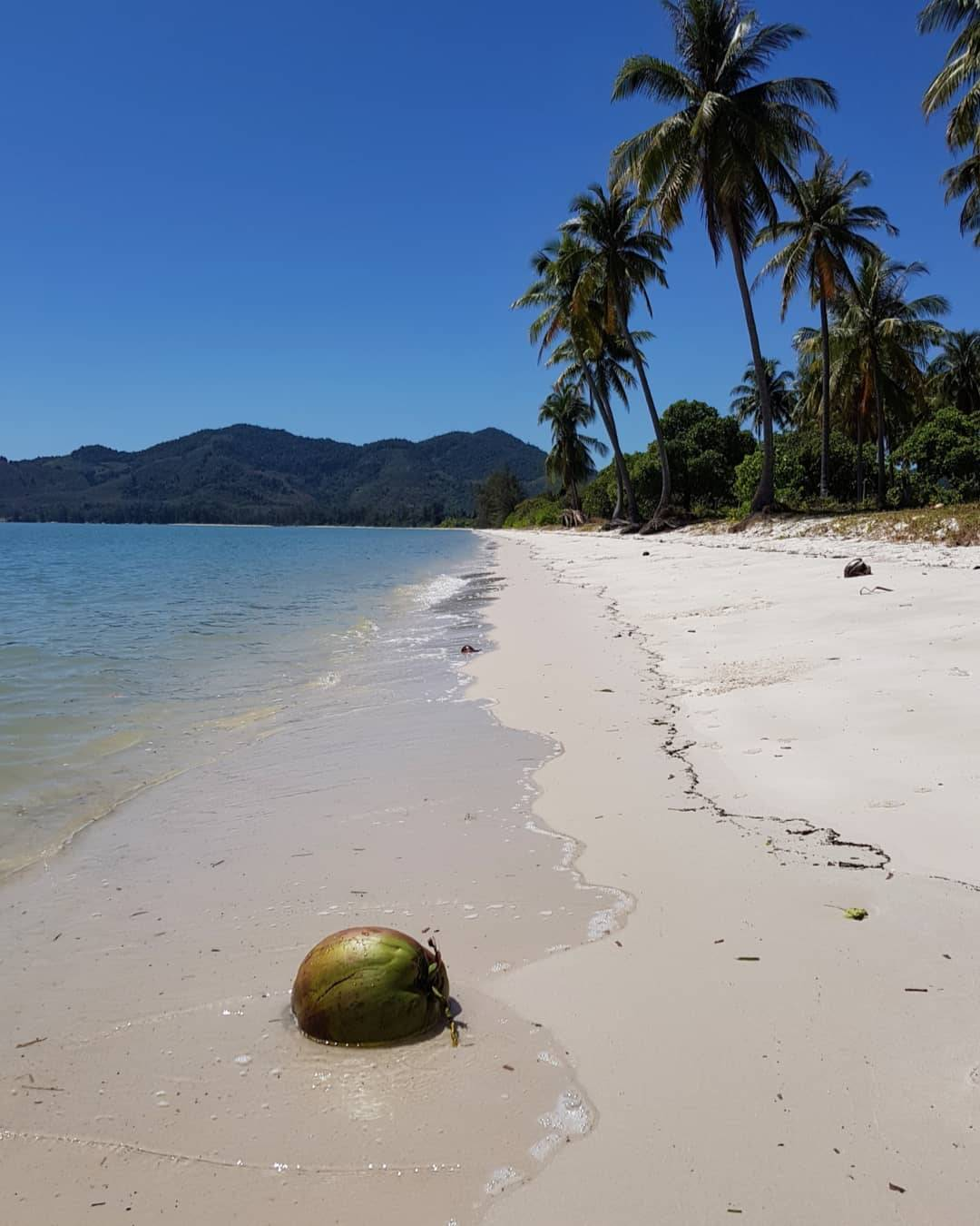 Coconut on the beach of Koh Yao Yai
