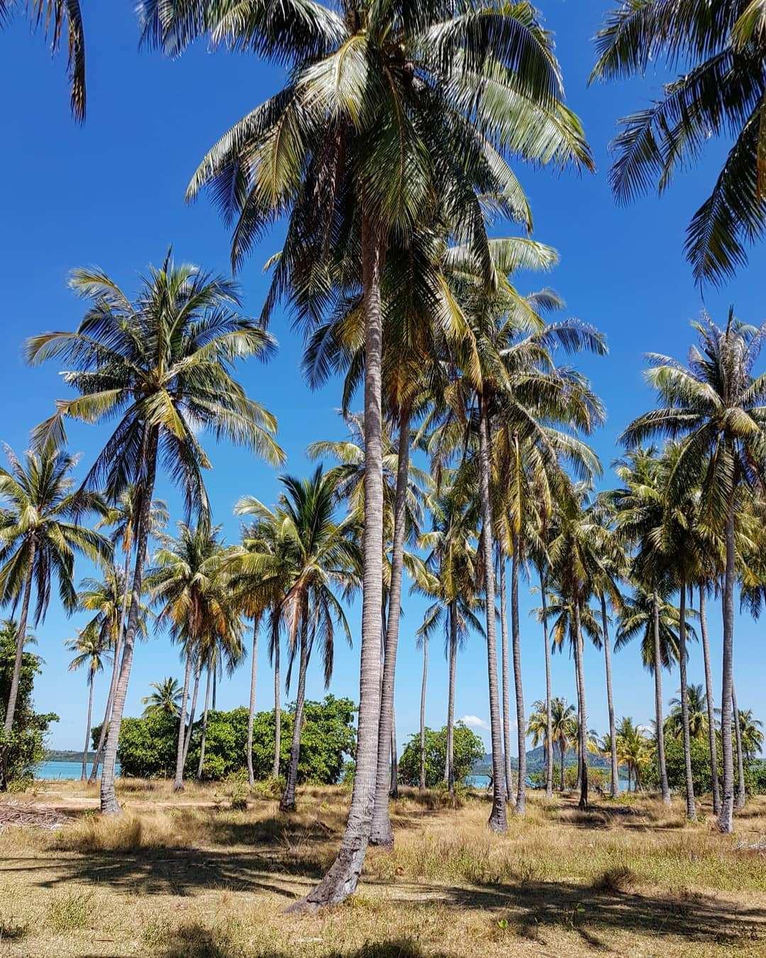 Palmbomen op Koh Yao Yai