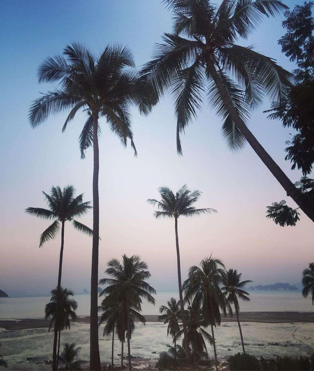 Mooie lucht met palmbomen op de voorgrond gezien vanaf Koh Yao Yai