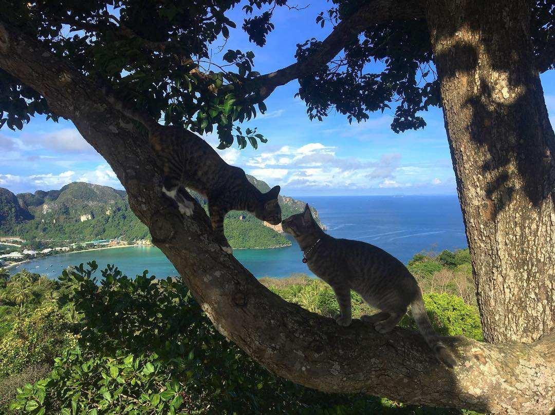 Twee katten die elkaar tegenkomen op Koh Phi Phi Viewpoint 2