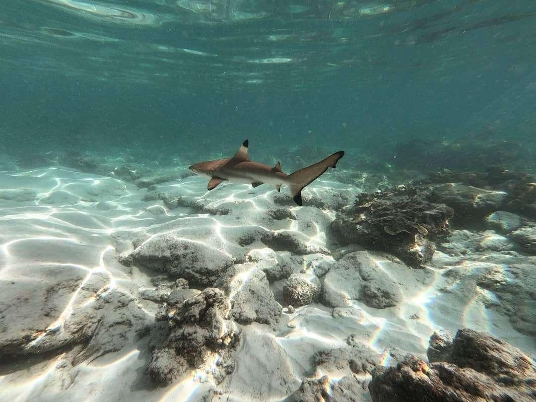 Haai bij Shark Point op Koh Phi Phi