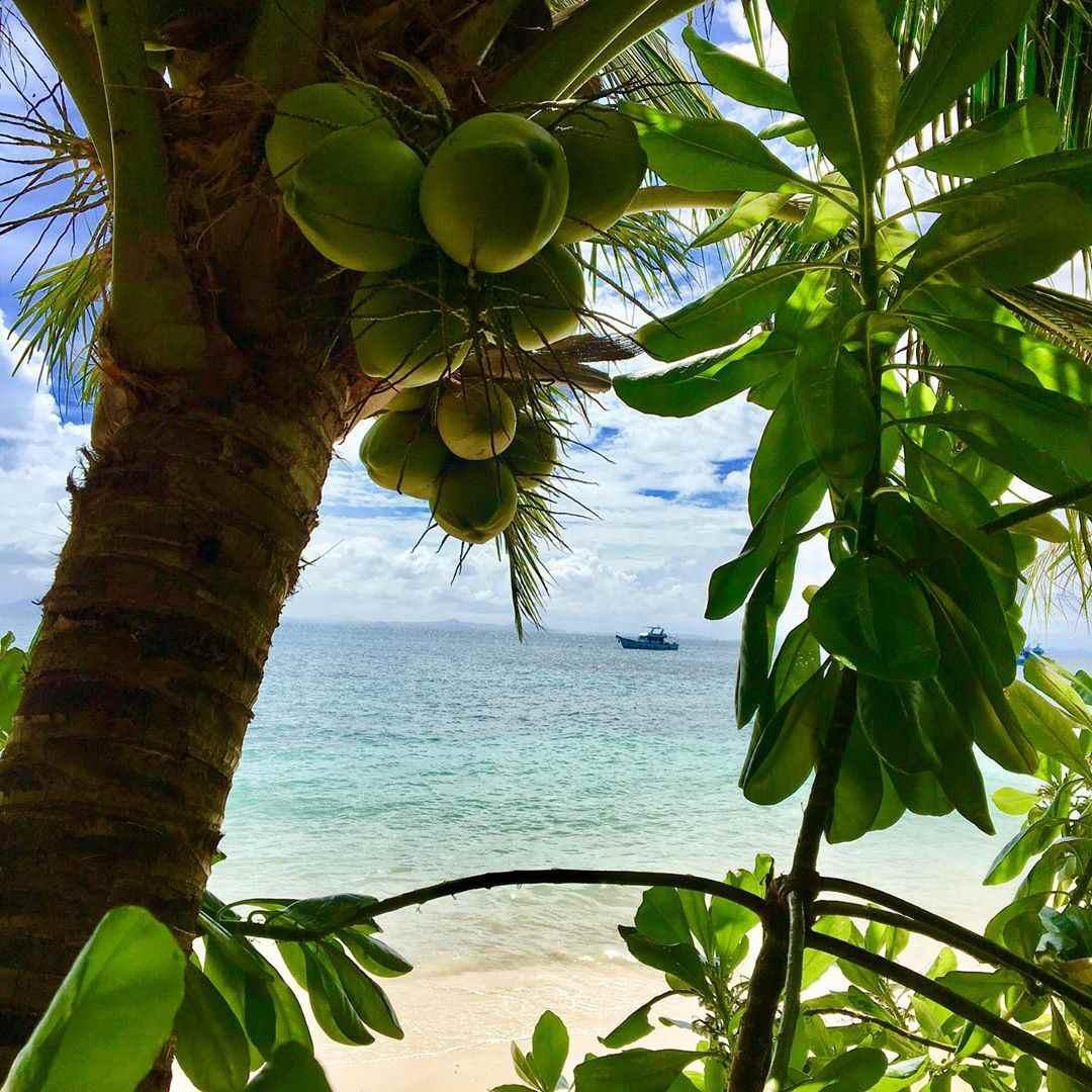 Kokosnoten in de bomen aan het strand van Phi Phi Relax Beach Resort