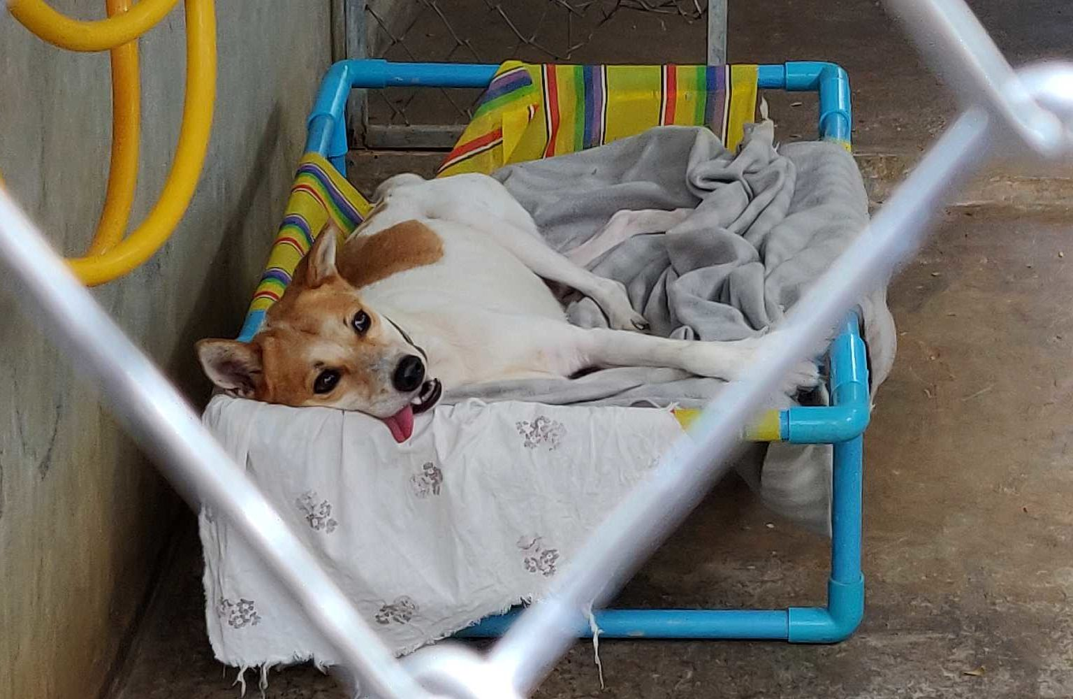 Animal Welfare, hond met zijn tong uit zijn mond op een bedje