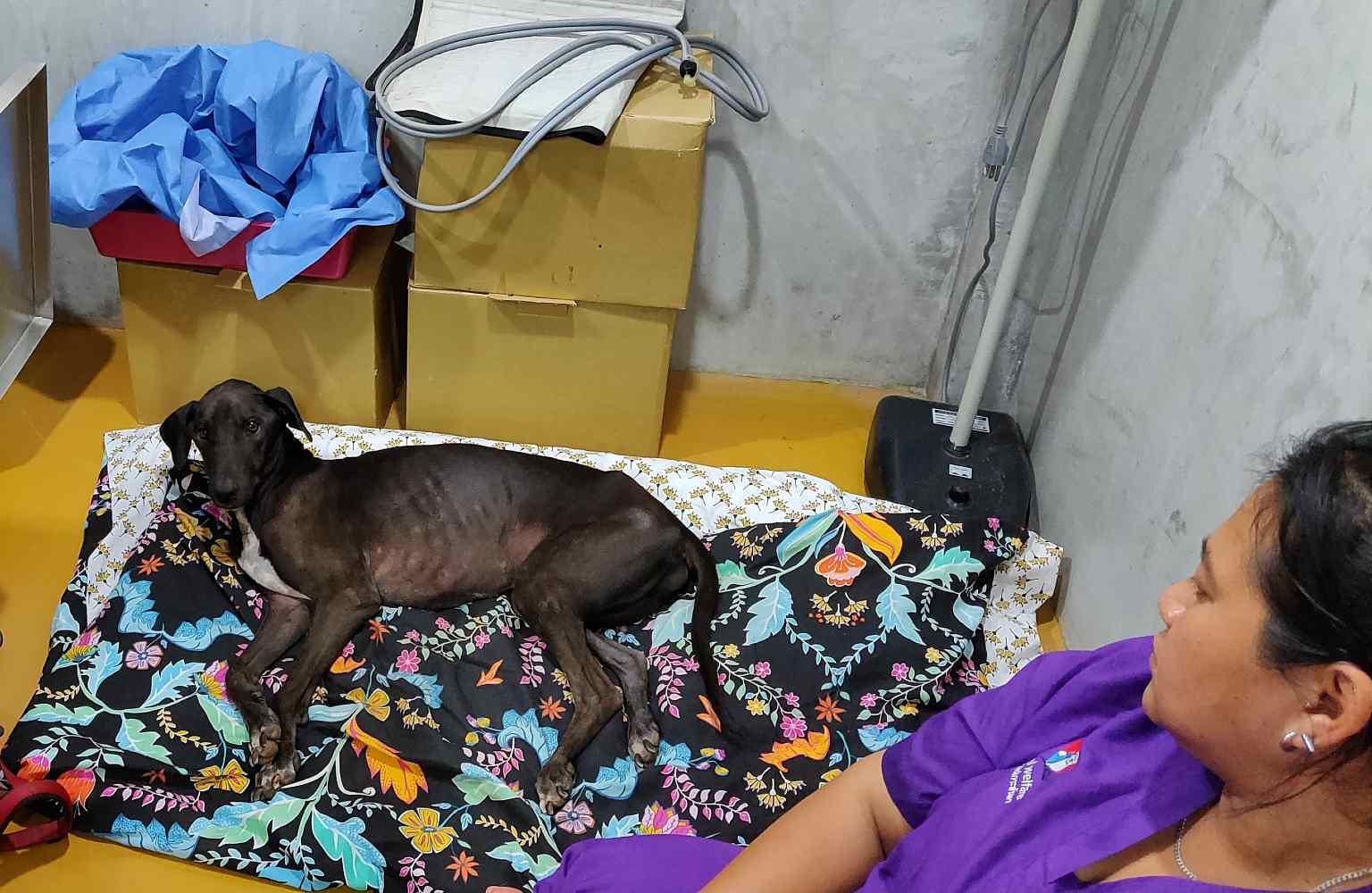 Lanta Animal Welfare, Rio in de ziekenboeg