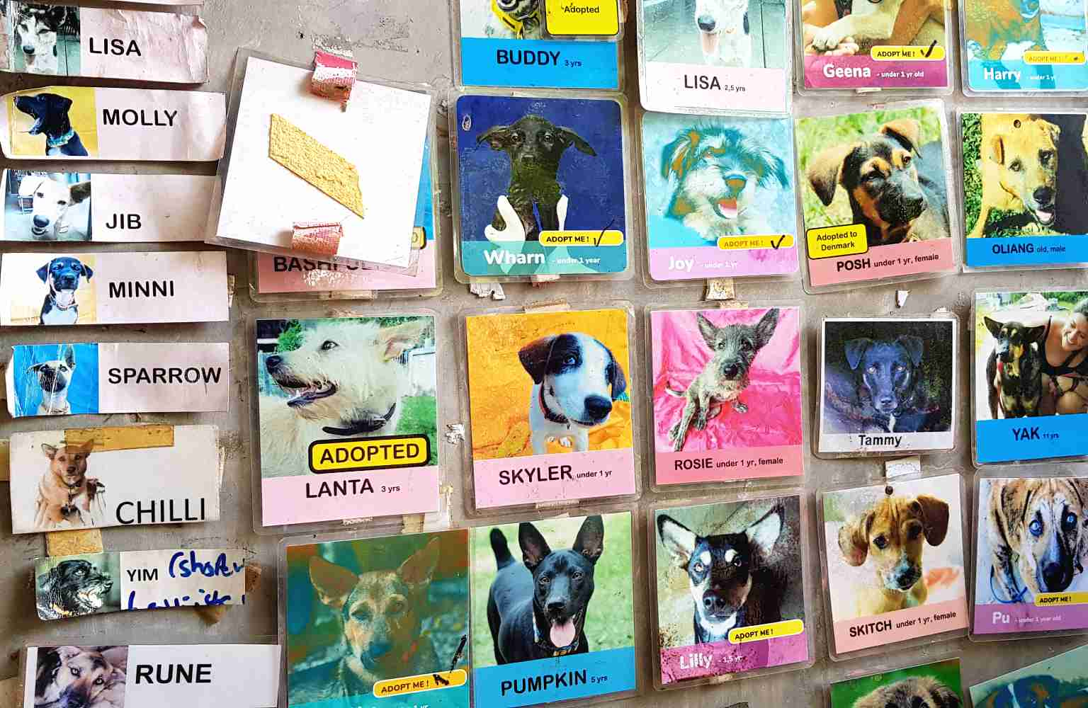 Pictures of dogs with their personal story in Lanta Animal Welfare