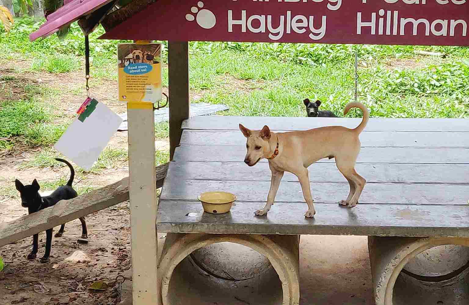 Lanta Animal Welfare, spelende honden
