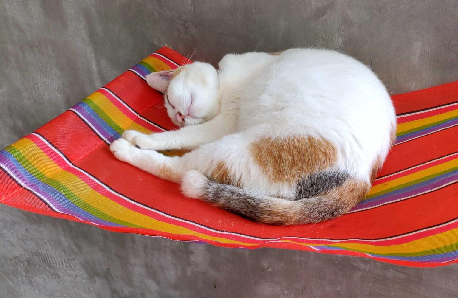 Lanta Animal Welfare, Sleeping Cat in Kitty City